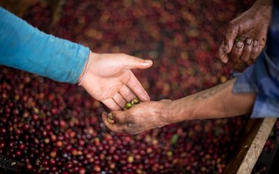 The Importance of Producer-Importer Relationships