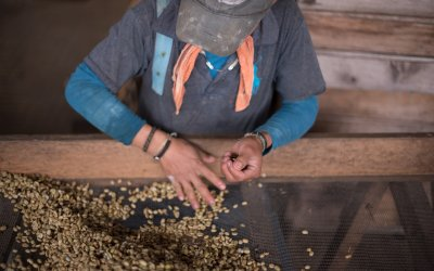 Quality Control: From Farm To Cup